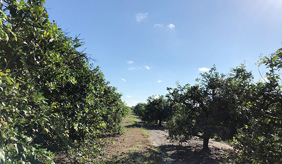 Jones Potato FarmRepresented the Seller, Jones Potato Farm, Inc. on the sale of their 820-acre farm and ranch in Parrish. The property is a combination of citrus groves, irrigated farmland, pastureland, and wooded areas. It sold for $8,000,000.
